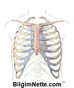 Göğüs Kemiği