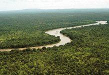 Gambia ırmağı