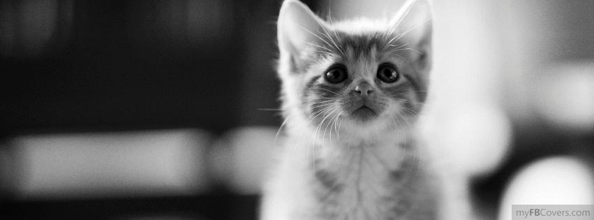 kedi acebook kapak fotografı