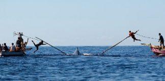 Balina Avcılığı
