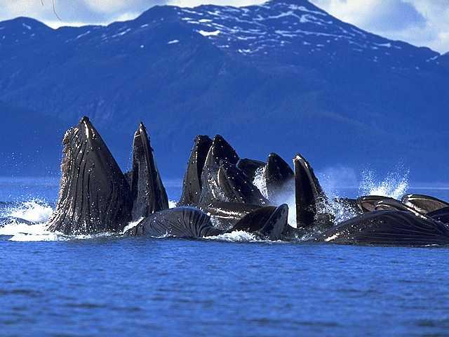 balinalar-körfezi