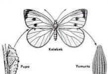metamorfoz