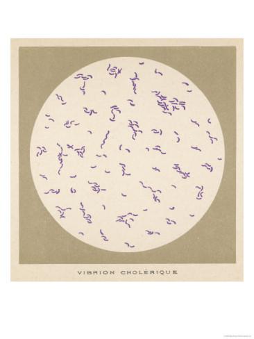 vibriyon