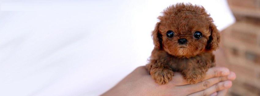 sevimli köpek facebook kapak fotoğrafı