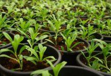 kibarli-bitkisel-urunleri