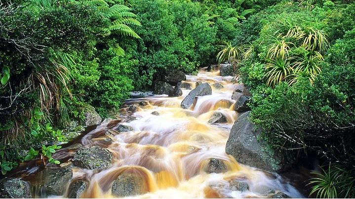 Yeni Zelanda 11
