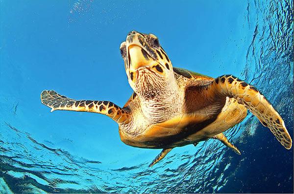 deniz-kaplumbagasi