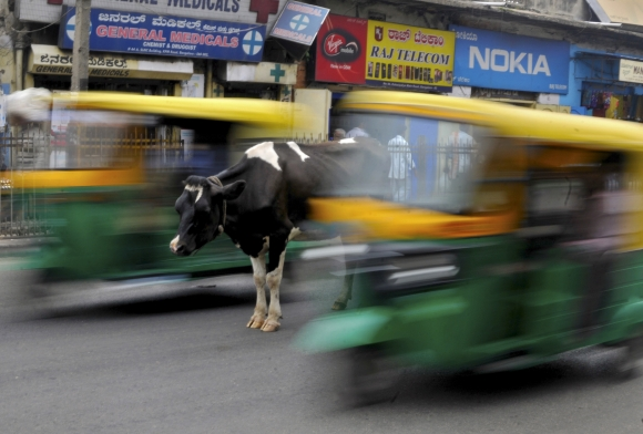 bengalaru-hindistanda-yol-ortasinda-bir-inek