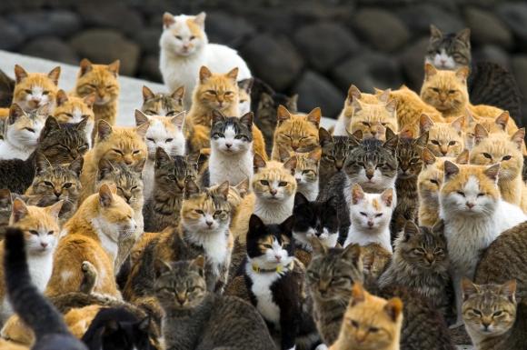 ehime-japonyada-kedi-toplulugu